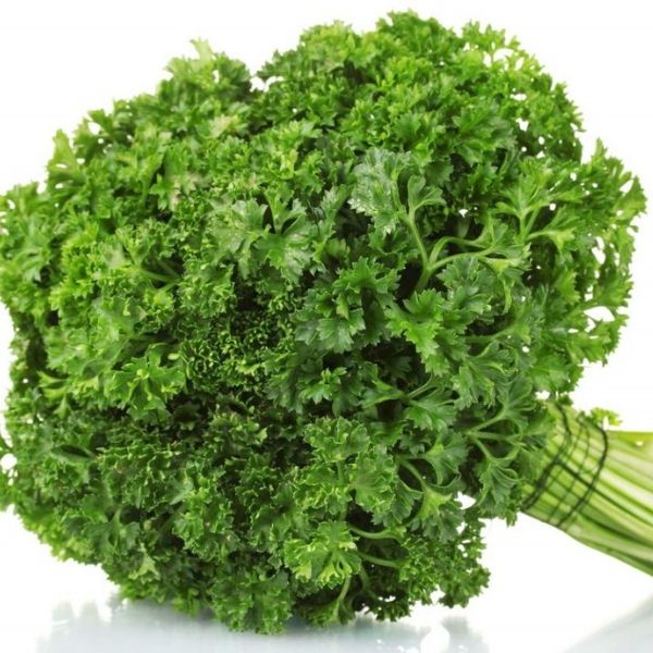 Parsley Curly (1)